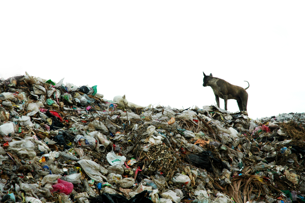 Украинцы производят вдвое больше отходов, чем граждане стран ЕС