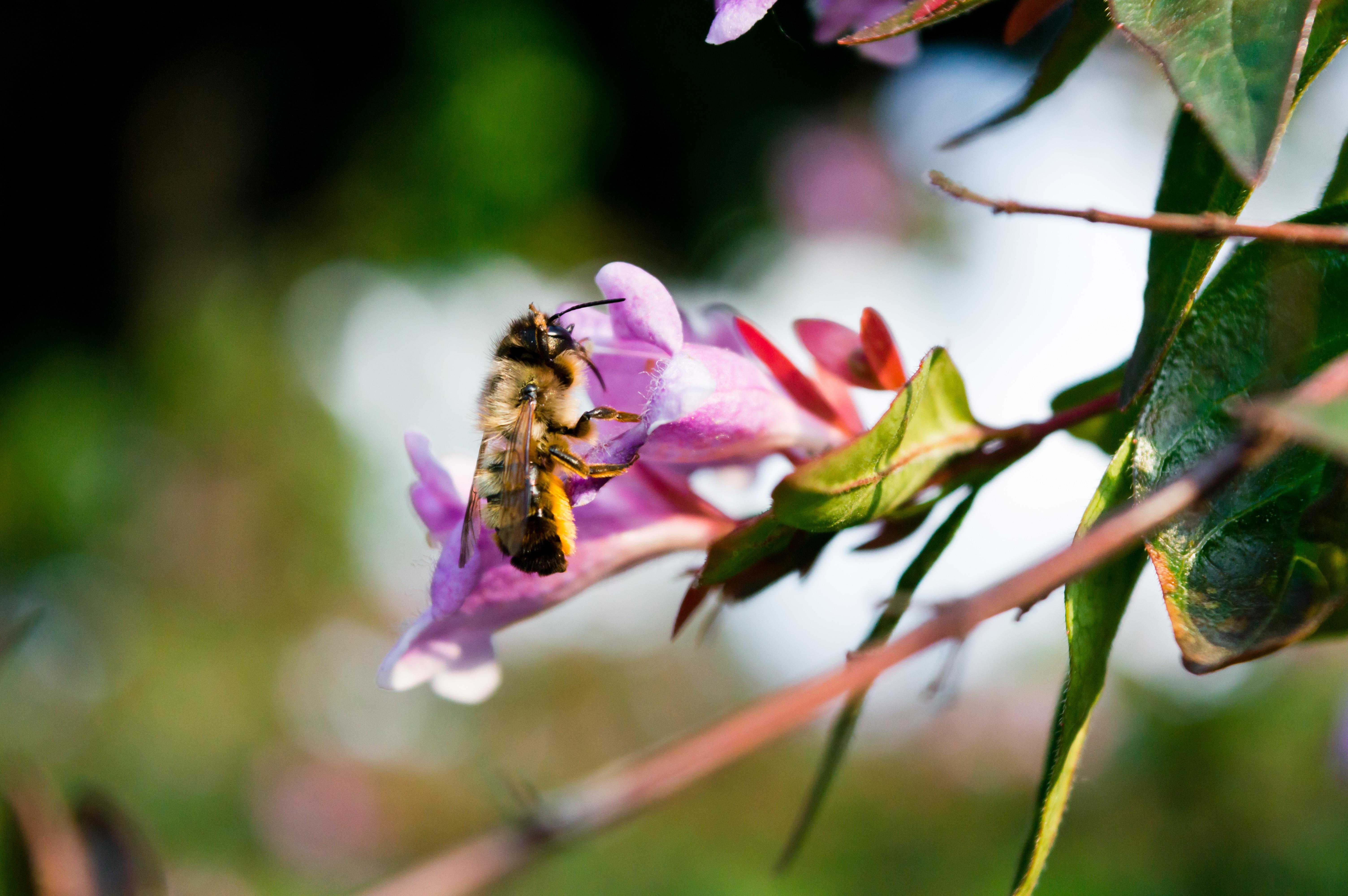 Из-за пестицидов пчелы забывают, как жужжать