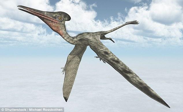 Китайские палеонтологи обнаружили рекордную кладку птерозавра из 200 яиц