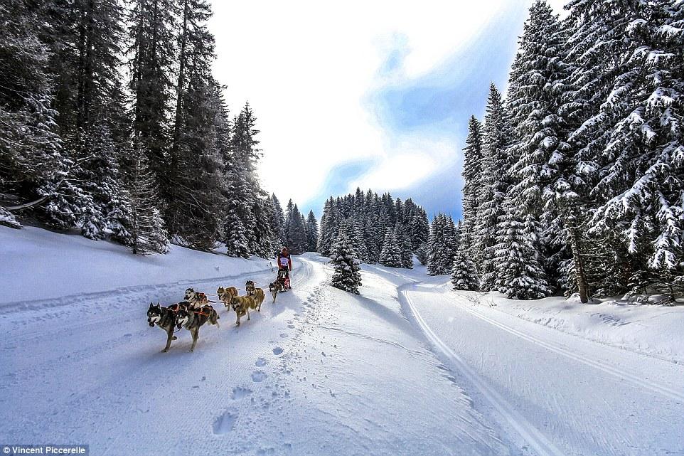 Во Французских Альпах стартовала гонка на собачьих упряжках (видео)