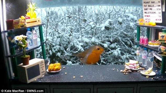 Британка сделала снек-бар для птиц из кукольного домика (видео)