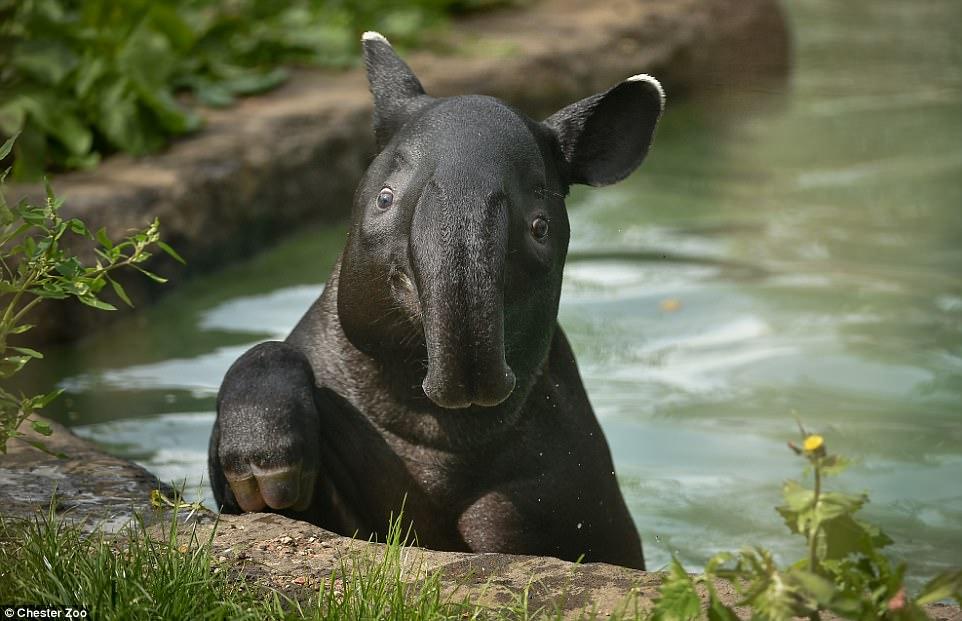 Новая жизнь: Честерский зоопарк показал фото малышей, рожденных в 2017 году