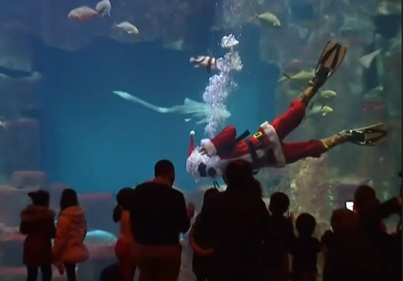 В Париже Санта-Клаус поплавал с акулами