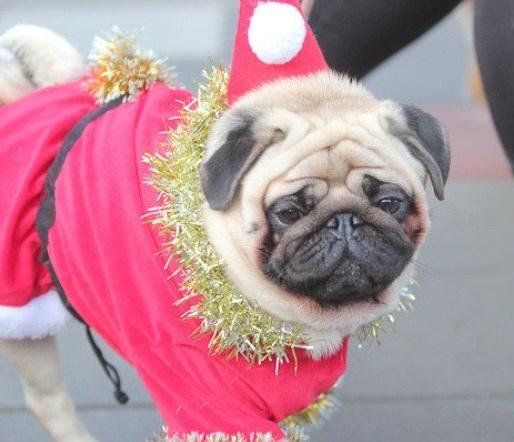В Кременчуге прошел парад собак – Санта-Клаусов