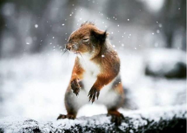 Финский фотограф снимает животных в странных ракурсах