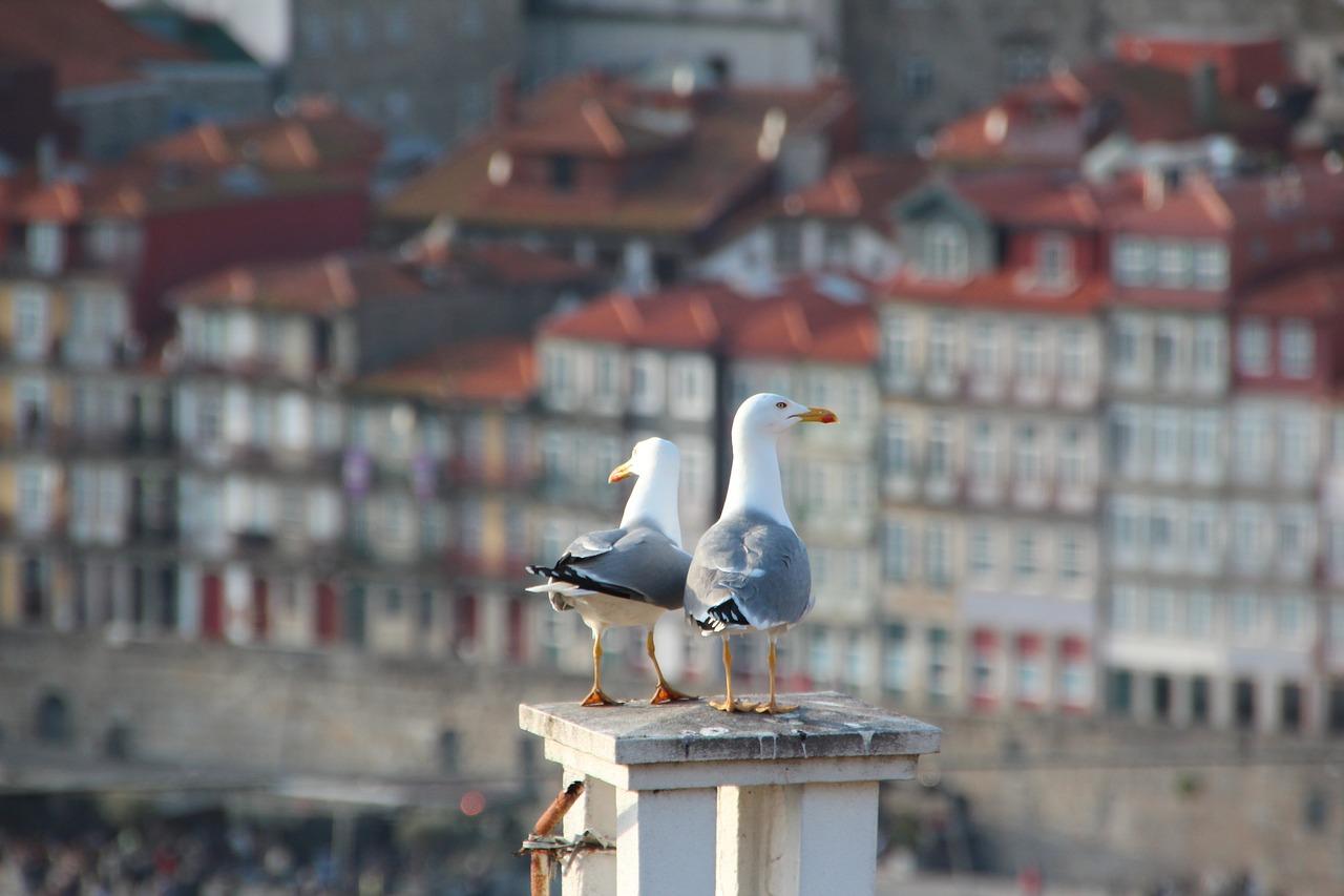 Португалия стала лучшей страной для получения вида на жительство