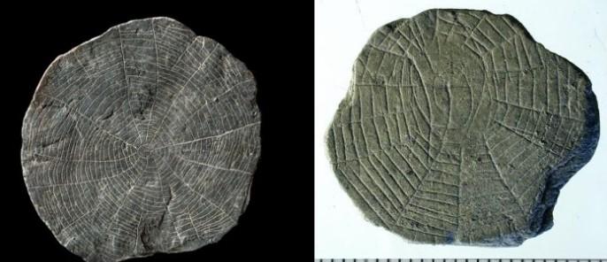 В Дании археологи нашли сотни загадочных камней с орнаментом