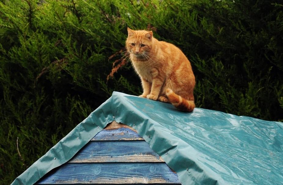 В Турции строят деревню для кошек.Вокруг Света. Украина