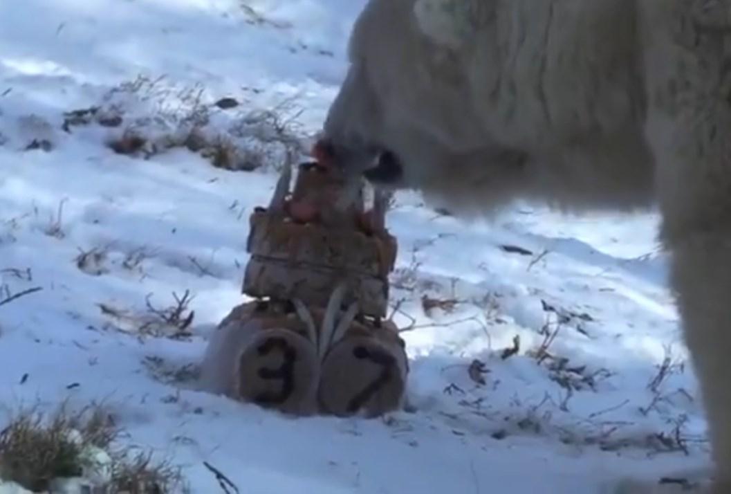 Самая старая медведица США отметила день рождения