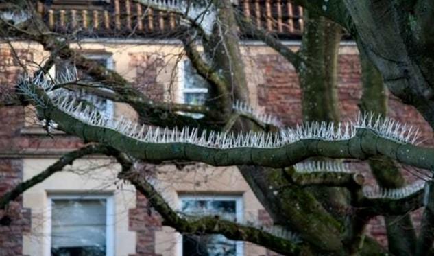 В Великобритании птицам запрещают садиться на ветки
