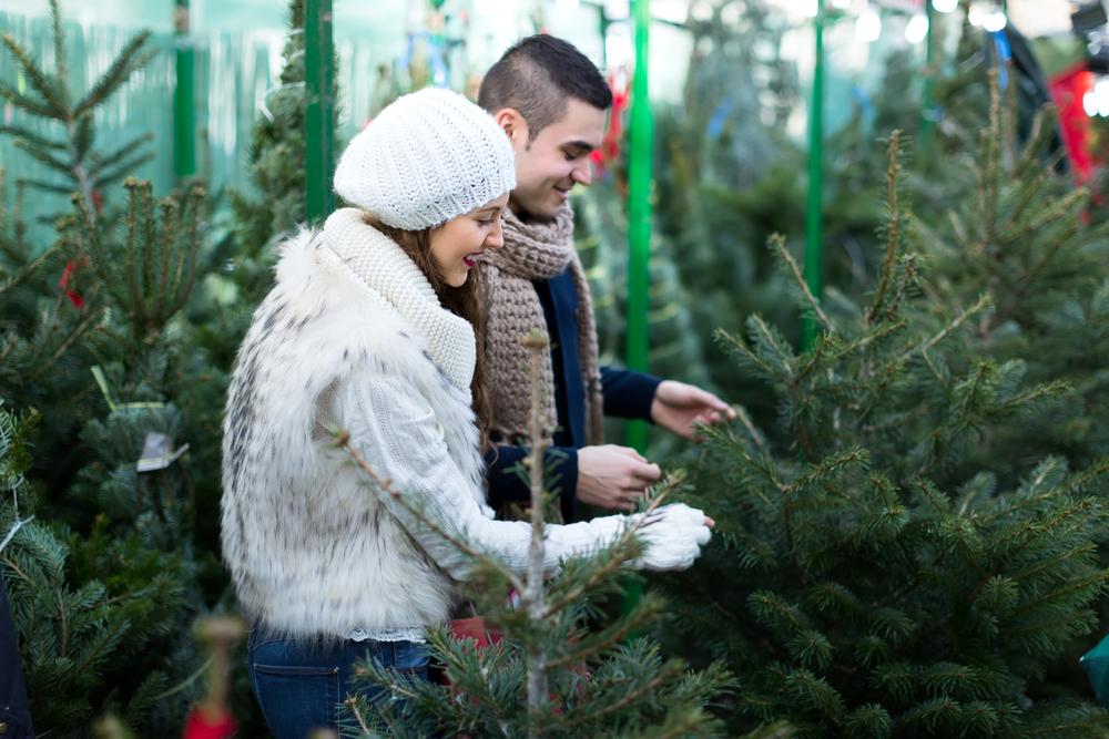 Новогодние елки: сколько стоят живые, искусственные и в горшках