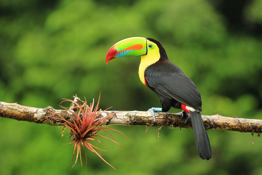 Полет над вулканом, ручные колибри и шоколадные плантации: чем заняться в Коста-Рике?