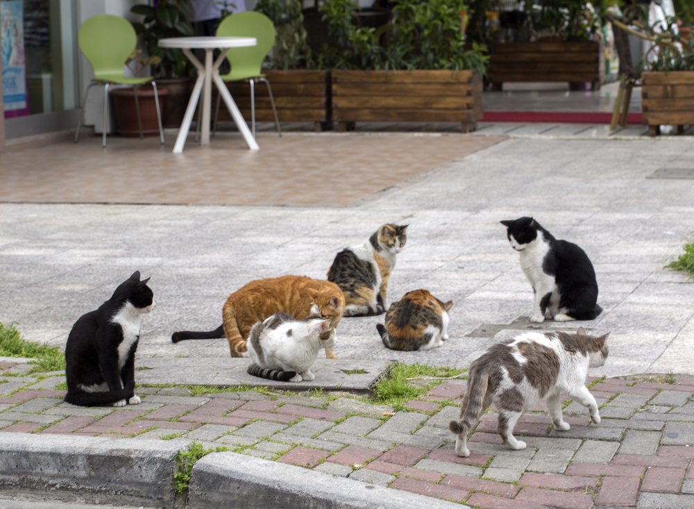 В Одессе запретили обижать бездомных котов