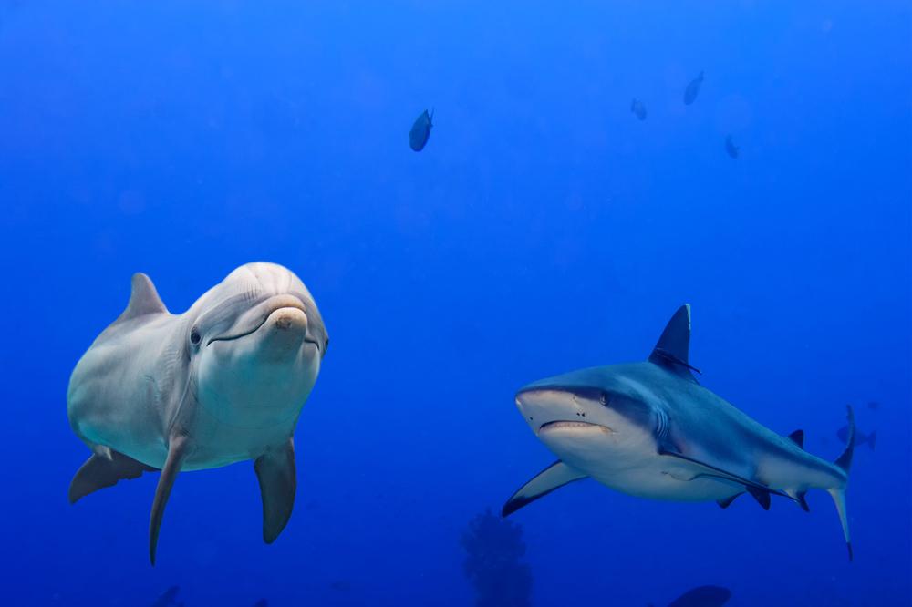 Почему акулы боятся дельфинов?.Вокруг Света. Украина