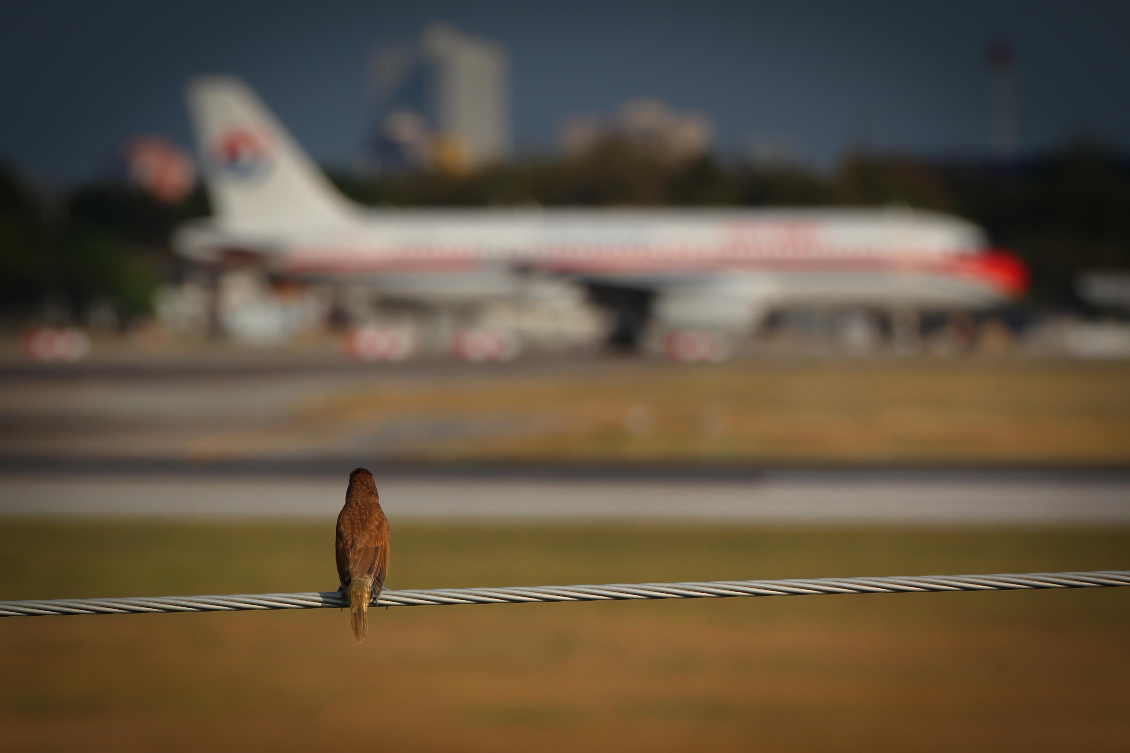 В США самолет совершил вынужденную посадку из-за любопытной птицы