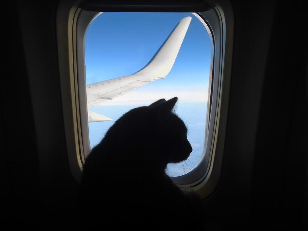 В Киеве самолет на Анкару задержали на два часа из-за кота
