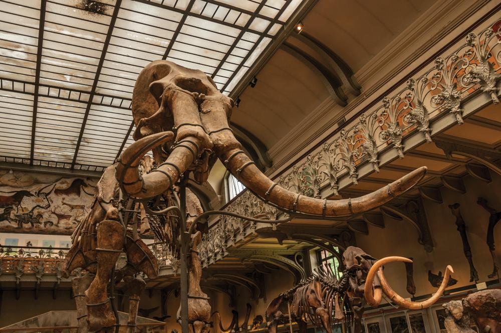 Кости доисторического мамонта были проданы на аукционе за полмиллиона долларов