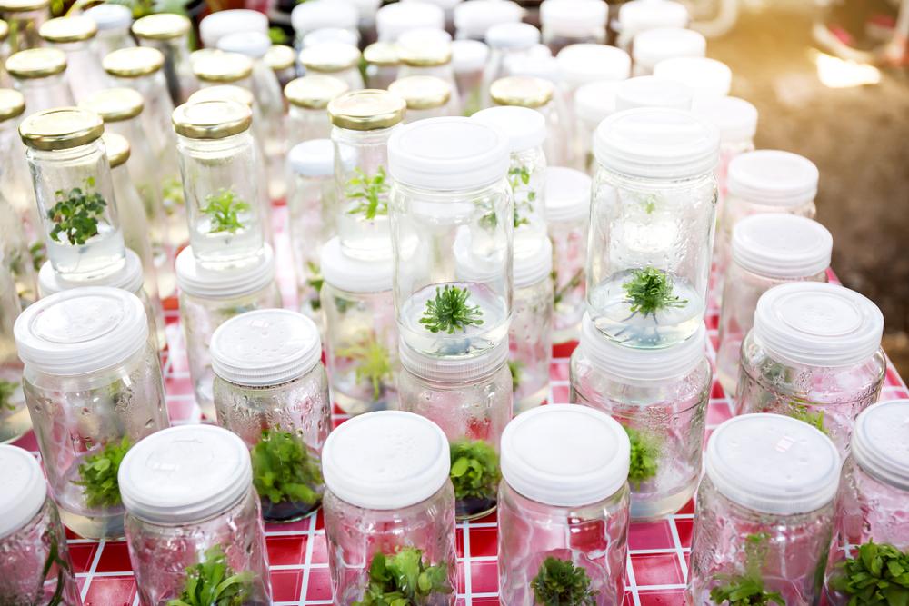Калифорнийские ученые создают растение для борьбы с глобальным потеплением.Вокруг Света. Украина