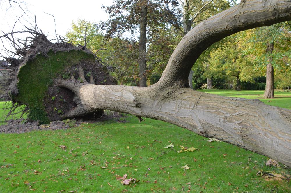 Подсчитан ущерб от природных катаклизмов в 2017 году