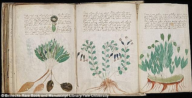 Программист взломал код средневекового манускрипта Войнича Программист взломал код средневекового манускрипта Войнича 43FF80FD00000578 4861262 image a 1 1504776909320 1