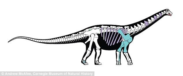 В Сахаре обнаружили новый вид гигантского динозавра В Сахаре обнаружили новый вид гигантского динозавра 48B5576200000578 5325917 image a 36 1517243614034