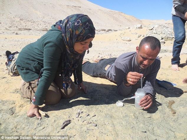 В Сахаре обнаружили новый вид гигантского динозавра В Сахаре обнаружили новый вид гигантского динозавра 48B5577200000578 5325917 image a 38 1517243635526