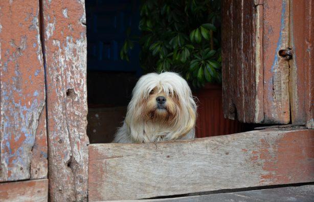 Мачу-Пикчу: город, который навсегда сохранит свои тайны Мачу-Пикчу: город, который навсегда сохранит свои тайны DSC 0472 614x395