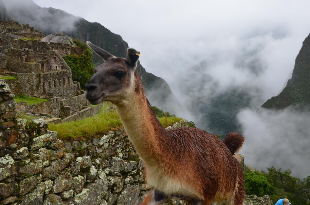 Мачу-Пикчу: город, который навсегда сохранит свои тайны Мачу-Пикчу: город, который навсегда сохранит свои тайны DSC 0930