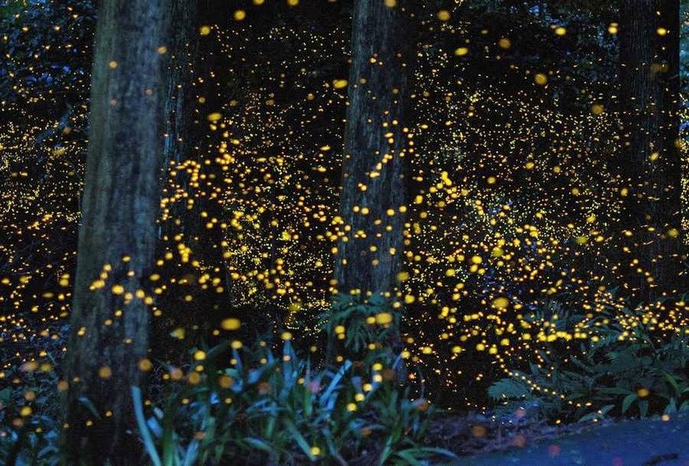 что смотреть в Малайзии Неоновые светлячки и гигантский цветок: что смотреть в Малайзии Foto4