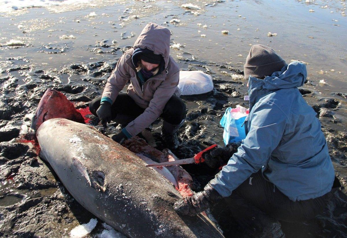 В США из-за аномальных морозов замерзают акулы