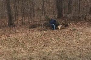 В США домашние собаки потребовали не выбрасывать елку