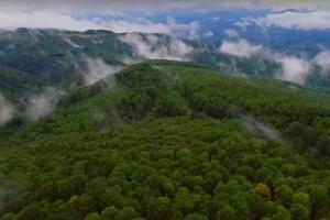 В Сети появился фильм о сохранении карпатских пралесов