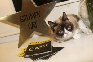 У мемов тоже есть права:  Сердитая кошка выиграла суд