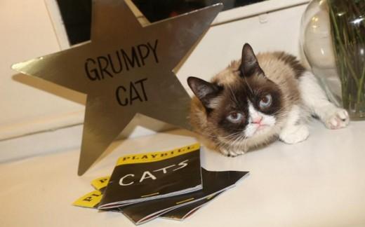 У мемов тоже есть права:  Сердитая кошка выиграла суд.Вокруг Света. Украина