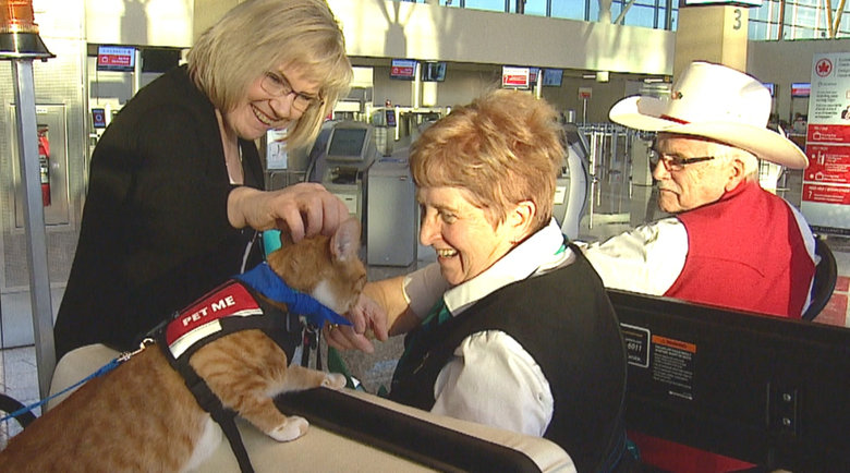 Аэропорт Канады нанял двух кошек для встревоженных пассажиров