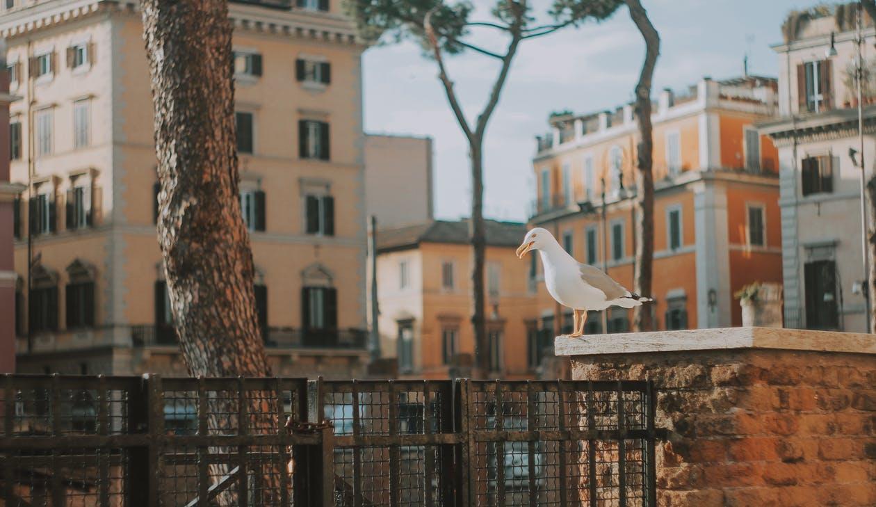 Этим летом в центре Рима появится пляж