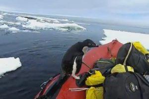 Пингвин стал инспектором: ученые сняли забавное видео