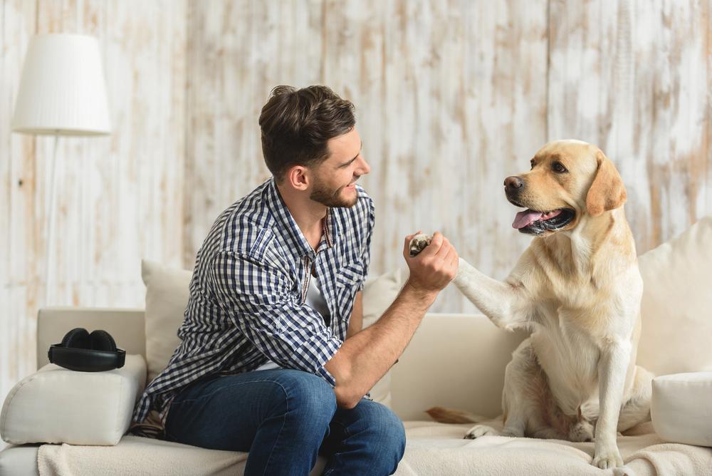 Люди смогут говорить с собаками с помощью переводчика, обещают ученые.Вокруг Света. Украина