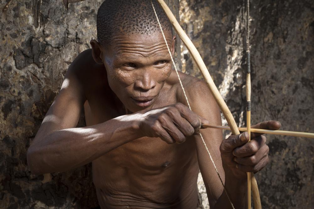 Яд для стрел африканских охотников превратили в мужской контрацептив.Вокруг Света. Украина
