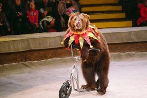 Животные в цирке: аргументы за и против