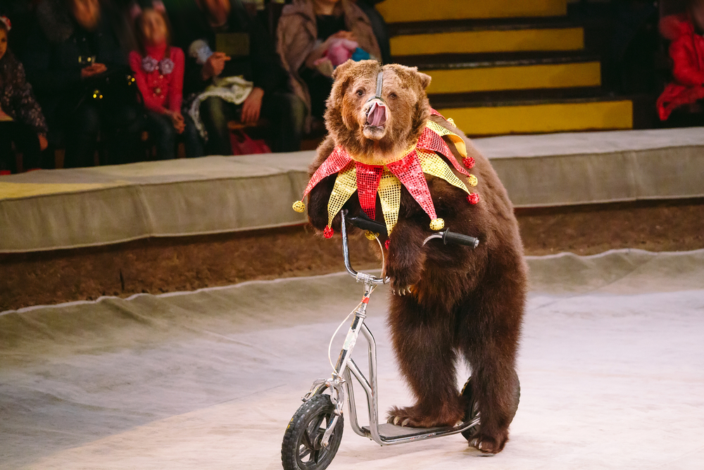 Животные в цирке: аргументы за и против.Вокруг Света. Украина
