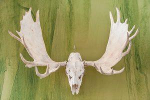 Под Киевом браконьеры застрелили беременную лосиху