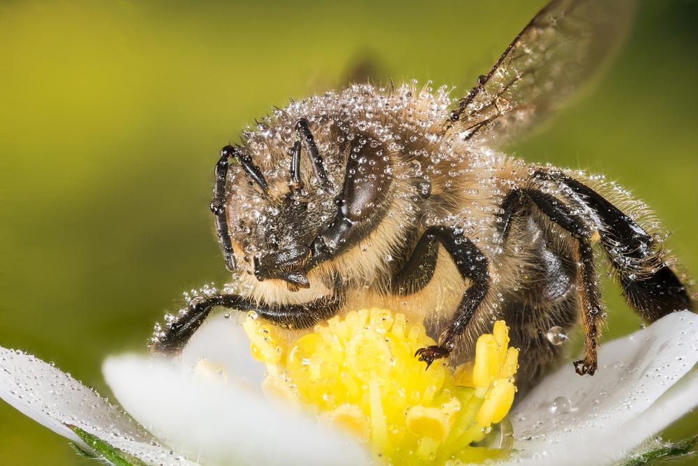Зачем пчелы делают мед?.Вокруг Света. Украина