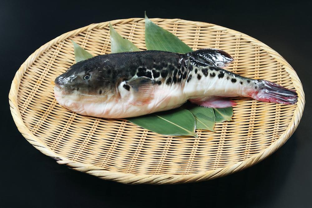 В Японии включили военную сирену из-за ядовитой рыбы фугу