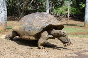 Американец  сел в тюрьму из-за размера черепахи