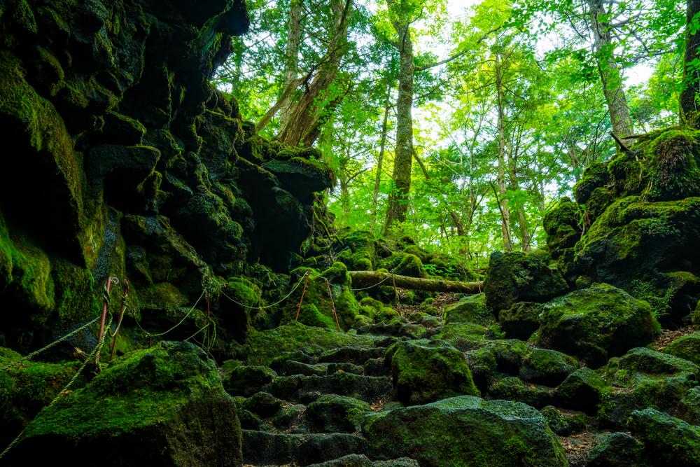 Видеоролик, снятый в лесу самоубийц, вызвал возмущение Японии.Вокруг Света. Украина