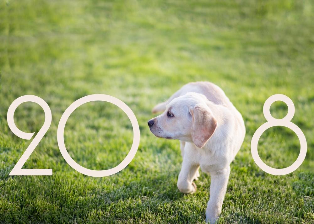 ТОП-10 потрясающих новостей о собаках