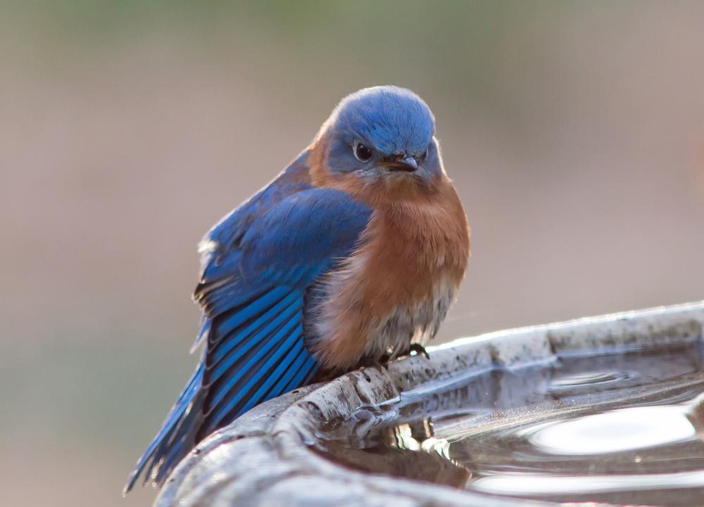 Шумовое загрязнение вызывает психические расстройства у птиц
