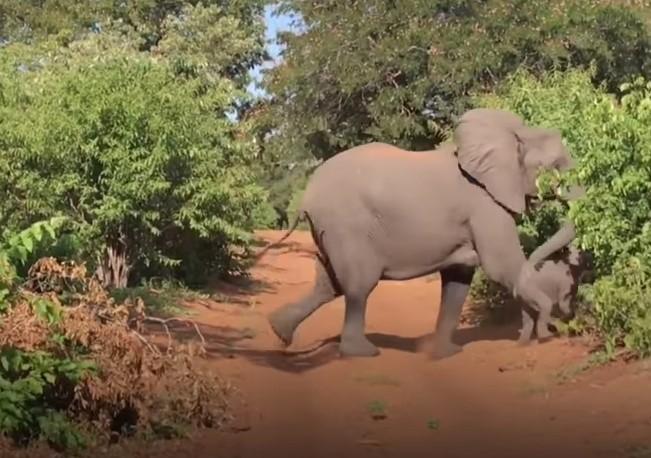 В Африке слон напал на автомобиль с туристами