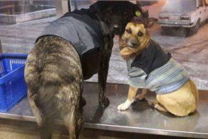 В Кременчуге бездомных собак нарядили в пиджаки